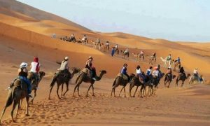 Camel Trek 1 Night Desert Camp